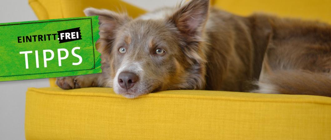 Hund auf einem gelbem Sofa