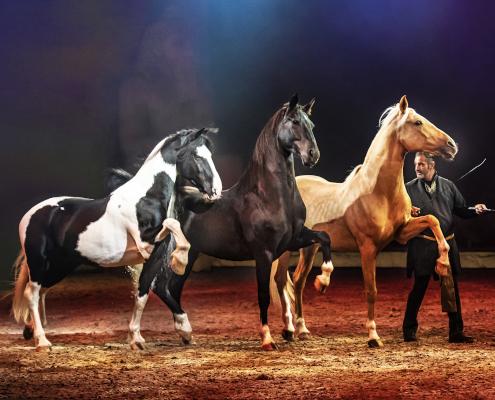 Drei Pferde und ein Dompteur in einer Arena